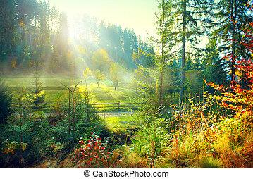 ködös, öreg, színhely, kaszáló, természet, reggel, countryside., ősz, gyönyörű, erdő