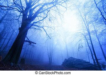 ködös, erdő, kedélyállapot, friss