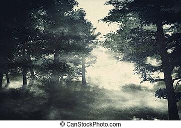 ködös erdő, sóvárog