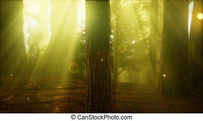 ködös erdő, szentjánosbogár, köd