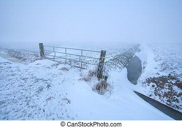 ködös, farmland, holland, jeges, reggel