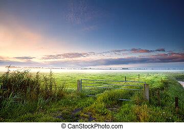 ködös, farmland, reggel, fense, holland