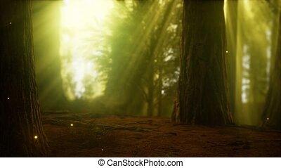 ködös, köd, szentjánosbogár, erdő