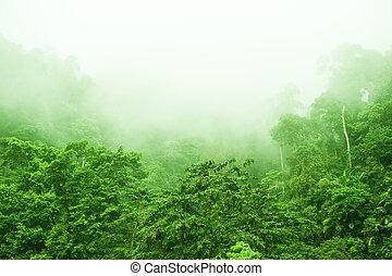 ködös, rainforest, reggel