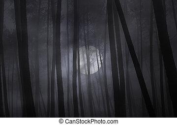 ködös, tele, erdő, night., hold