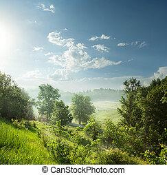 ködös, zöld erdő, reggel