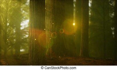 köd, erdő, ködös, szentjánosbogár