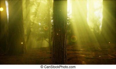 köd, erdő, szentjánosbogár, ködös