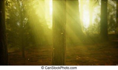köd, ködös erdő, szentjánosbogár