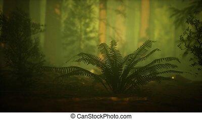 köd, szentjánosbogár, erdő, ködös