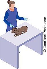 kölyök, állatorvos, mód, kutya, isometric, ikon