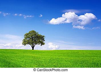 környezet, kitakarít