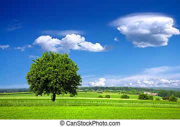 környezet, zöld