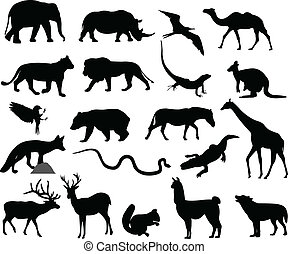 körvonal, állatok