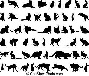 körvonal, állhatatos, macska