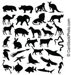 körvonal, animals3, gyűjtés
