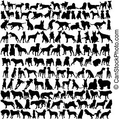 körvonal, kutya, száz