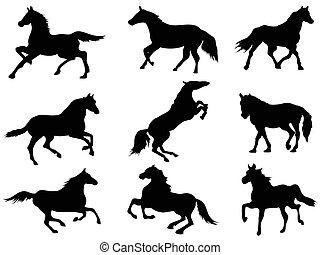 körvonal, ló