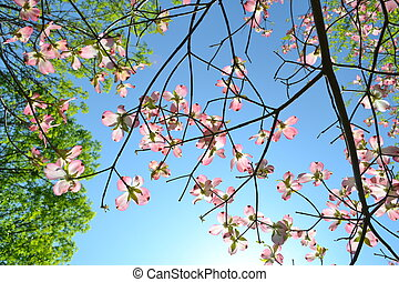 közben, virágzás, bitófák, eredet