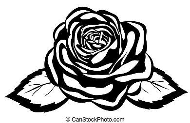 közelkép, elvont, rose., elszigetelt, black háttér, fehér