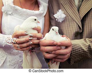 közelkép, kézbesít, lovász, menyasszony, esküvő, gerle