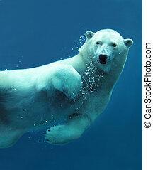 közelkép, víz alatti, jegesmedve