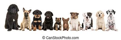különböző, csoport, tíz, fajta, fajta, nagy, háttér, kutyus, fehér