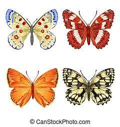 különféle, pillangók