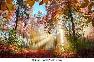 küllők, ősz, nap, erdő, mesés