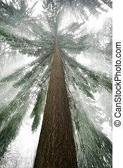 küllők, tél csillogó, fa, csinos, friss