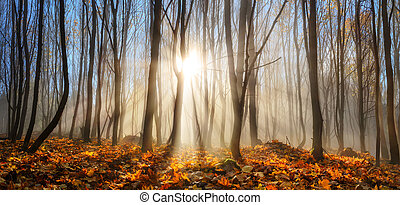 küllők, tél, napvilág, ősz, bűbájos, erdő, vagy