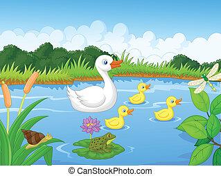 kacsa, karikatúra, család úszás