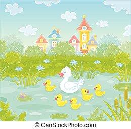 kacsa, kicsi, sárga, fehér, kiskacsák