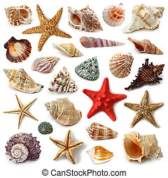 kagyló, gyűjtés