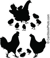 kakas, madár, csirke, tyúk
