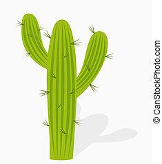 kaktusz, ábra