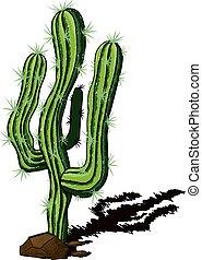 kaktusz, elhagyott