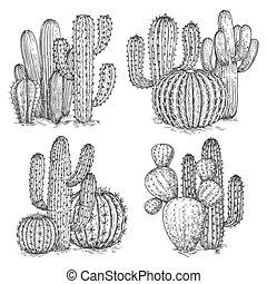 kaktusz, illustration., dezertál, elszigetelt, kéz, vektor, háttér, sketched, white virág, compositions