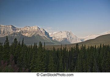 kanada, kanadai, -, nemzeti, bizonytalanok, liget, gáspár, alberta