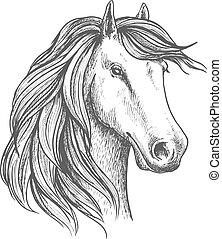 kanca, elszigetelt, arabian ló, skicc, fej
