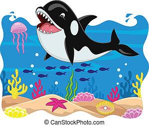 kardszárnyú delfin, kartondoboz