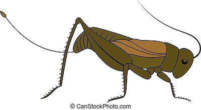 karikatúra, insect., grasshopper., csinos