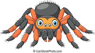 karikatúra, pók, tarantellapók