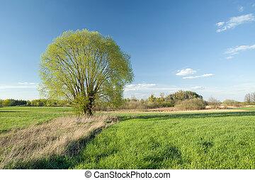 kaszáló, fa, napos, zöld, nagy, eredet