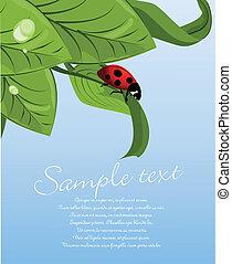 katicabogár, levél növényen, zöld