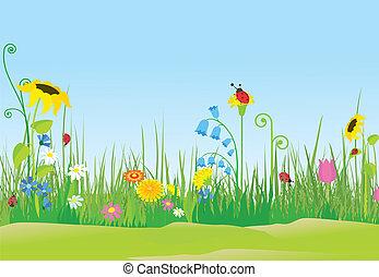 katicabogár, virág, kaszáló
