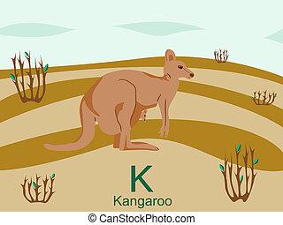 kenguru, k, abc, állat