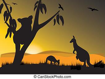 kenguru, koala