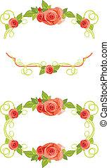 keret, agancsrózsák, virágzó