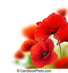 keret, háttér, zöld, mákok, virágos, fehér, tervezés, piros